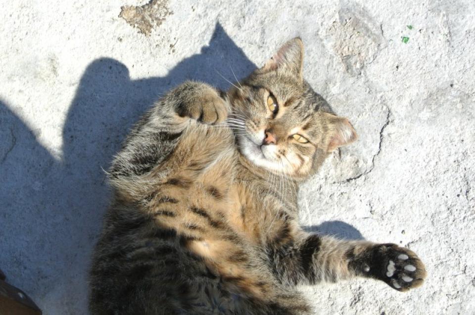 4557039cd88d Eπιστημονική έρευνα επιβεβαιώνει ότι οι γάτες μπορούν να αναγνωρίσουν το όνομά  τους!