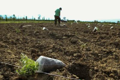 Προκήρυξη για υποβολή αιτήσεων για την «Ανάπτυξη μικρών γεωργικών εκμεταλλεύσεων»