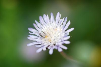 Το λουλούδι που βιάστηκε να φέρει την Άνοιξη