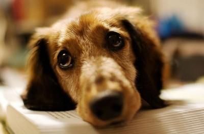 Αλήθεια οι σκύλοι κλαίνε;