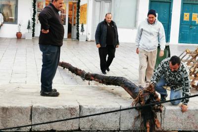 Επικίνδυνος κορμός δέντρου ανασύρθηκε από τη θάλασσα της Ύδρας για να μην προκληθούν ατυχήματα