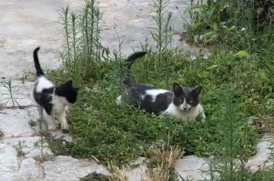 Η Υδραϊκή Κιβωτός και οι εθελοντές της ταΐζουν τις γατούλες του νησιού