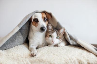 Σε δημόσια διαβούλευση το ν/σ για τα ζώα συντροφιάς