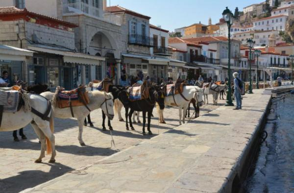 Municipality of Hydra: Equines and Hydra