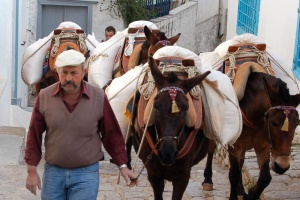 To 4ο International Mule and Donkey Conference τον Οκτώβριο στην Ύδρα