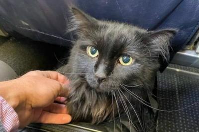 Απίστευτο !  Μετά από πέντε χρόνια, 1.900 χλμ. μακριά, άνδρας βρήκε τον γάτο του