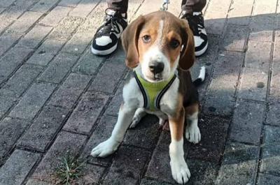 Υδραϊκή Κιβωτός:  Τι πρέπει να κάνουν οι πολίτες αν εντοπίσουν κάποιο αδέσποτο σκυλί στο νησί