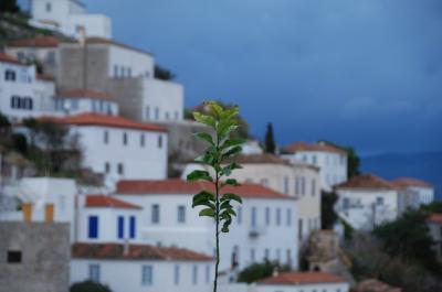 Χόρτα, βότανα  και φυτά: Ένας επίγειος της Ύδρας θησαυρός