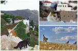 Ανακοίνωση της «Κιβωτού της Ύδρας» για τις πρόσφατες δράσεις της και ενημέρωση των πολιτών