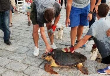 Διάσωση θαλάσσιας χελώνας στην Ύδρα