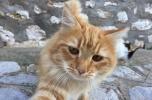 """Ημέρα φροντίδας και θεραπείας γατών από την """"Υδραϊκή Κιβωτό"""""""