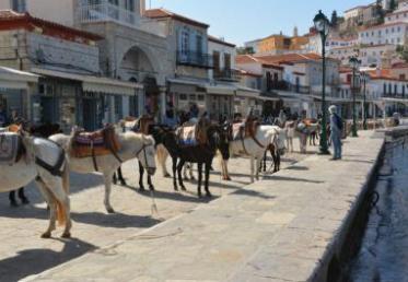 Ανακοίνωση του Δήμου Ύδρας για τα ιπποειδή του νησιού