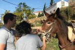 Ολοκληρώθηκε η φροντίδα των ιπποειδών της Ύδρας από την Animal Action