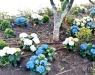 Νέος καλλωπισμός των φυτών στον Κήπο των Υδραίων Ζωγράφων. Μια ευγενική χορηγία του Αλέξη Βερούκα