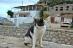 Τι συμπεραίνει νέα επιστημονική έρευνα για τη νοημοσύνη των γατών