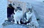Σε λίγες μέρες η φροντίδα αδέσποτων γατών από την Υδραϊκή Κιβωτό
