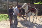 Φροντίδα ιπποειδών από την Animal Action στις 8,9 & 10 Οκτωβρίου