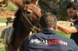 Δωρεάν παροχή φροντίδας ιπποειδών στις 17, 18, 19 & 20 Οκτωβρίου